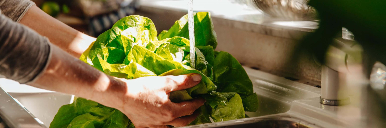 Hände waschen Salatkopf