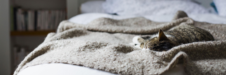 Schlafende Katze auf Decke
